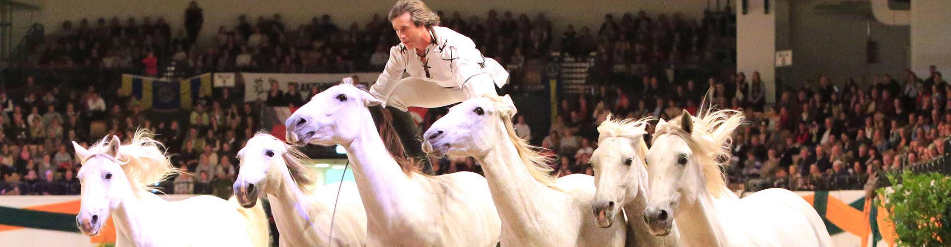 Pressefoto Tammo Ernst Trakehner Pferdezucht Pferdesport